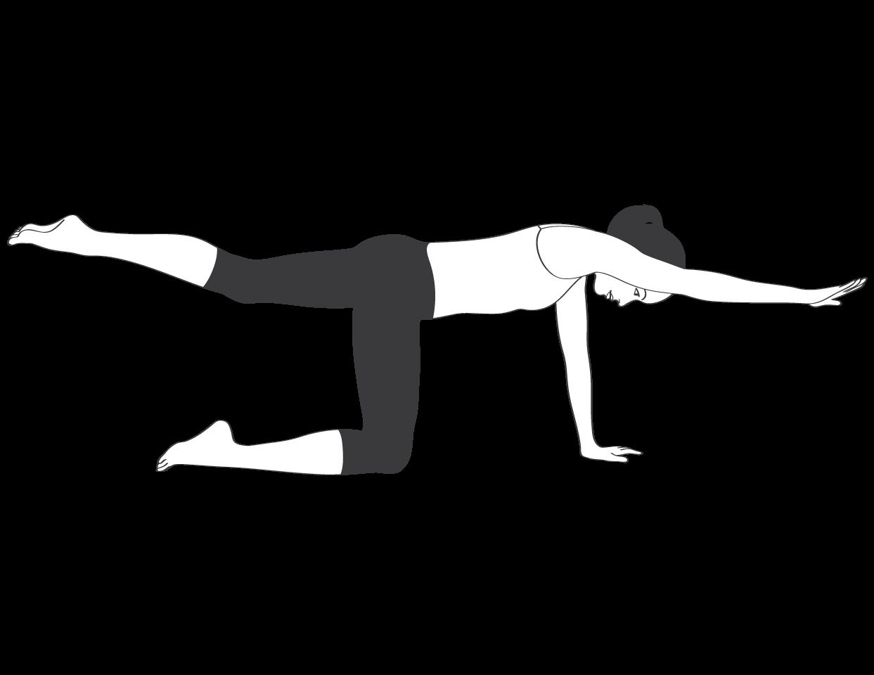 lower back strengthening exercises pdf